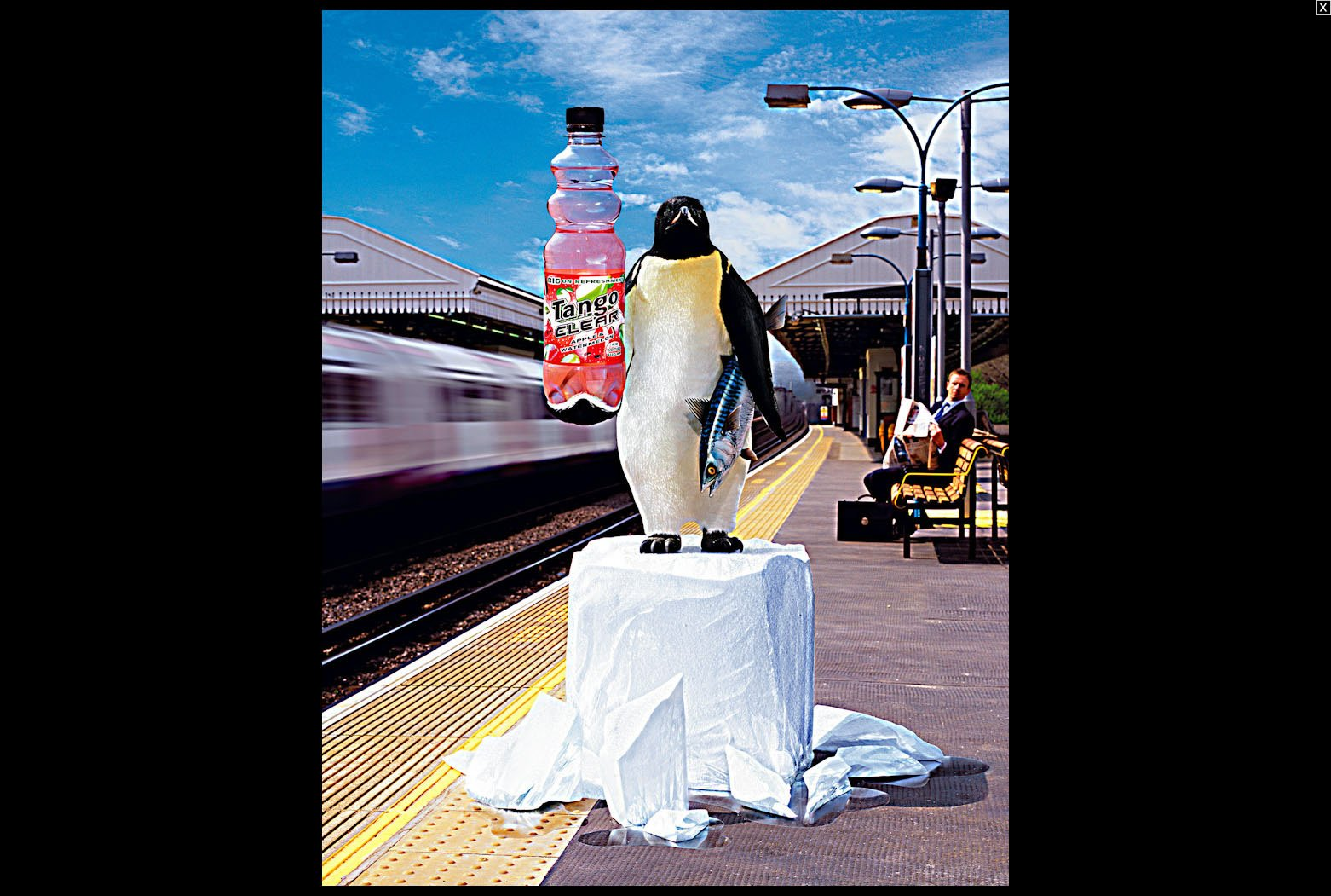 Tango Clear - Penguin