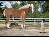 World's Largest and Smallest Horse